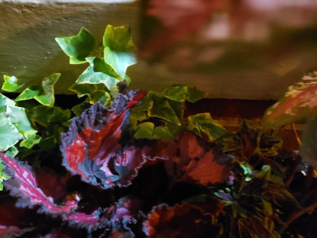 Night swamp philly flowers